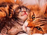 Для кошек и котят