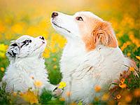 Для собак и щенков