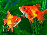 Рыбкам